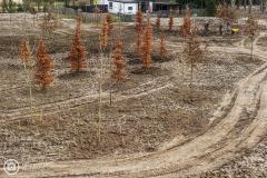 20190220-amersfoort_elisabeth-groen_planten_bomen-013