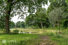 20210622_amersfoort_park-elisabeth-groen_023