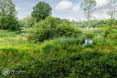 20210622_amersfoort_park-elisabeth-groen_036