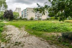 20170907-amersfoort_hogekwartier_veld-5-004
